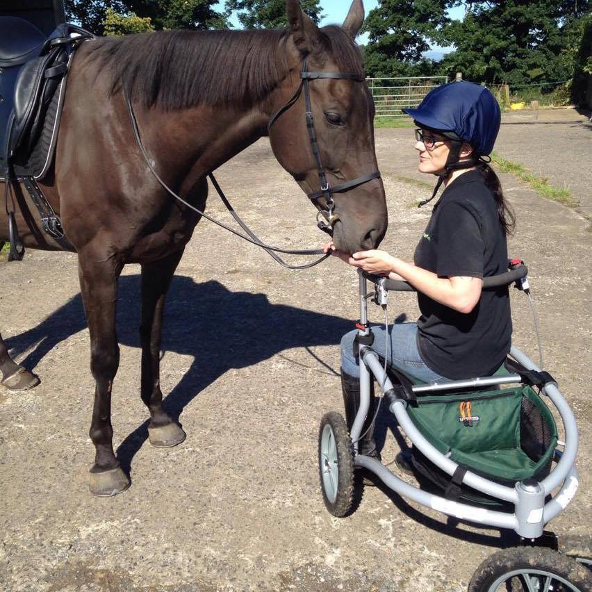 El caballo de Johannes, Bobkat, aprueba el nuevo Veloped
